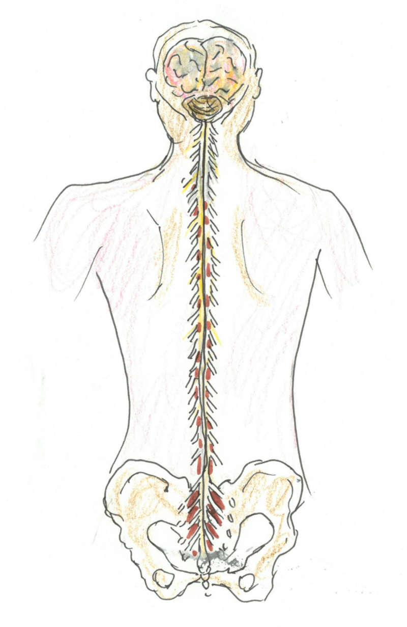 Chiropraktik Wirbelsäule